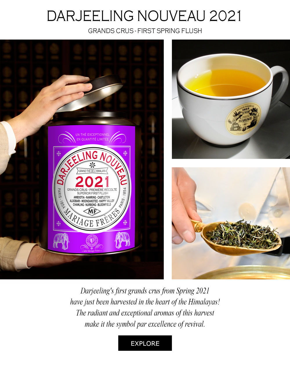 NAMRING KING UPPER® Darjeeling First Flush 2021